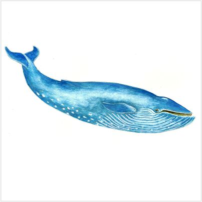 136-Blue Whale-stayreading