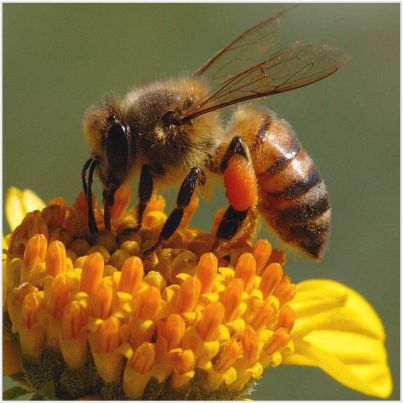 193-honey bee facts in hindi-stayreading