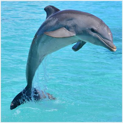 211-dolphin facts in hindi-stayreading