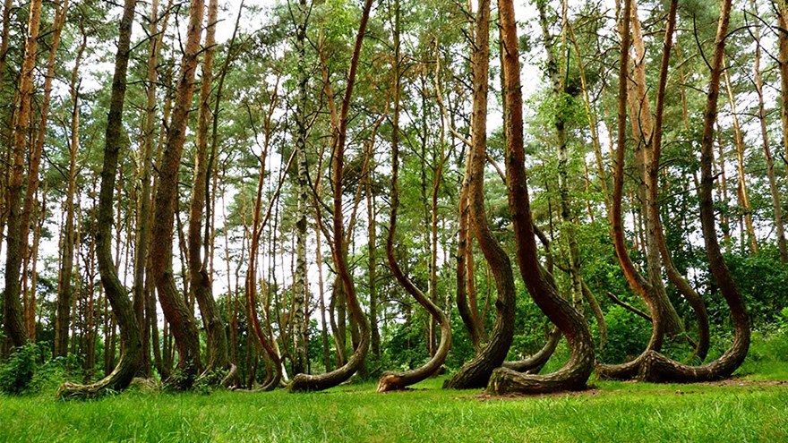 Crooked forest-stayreading