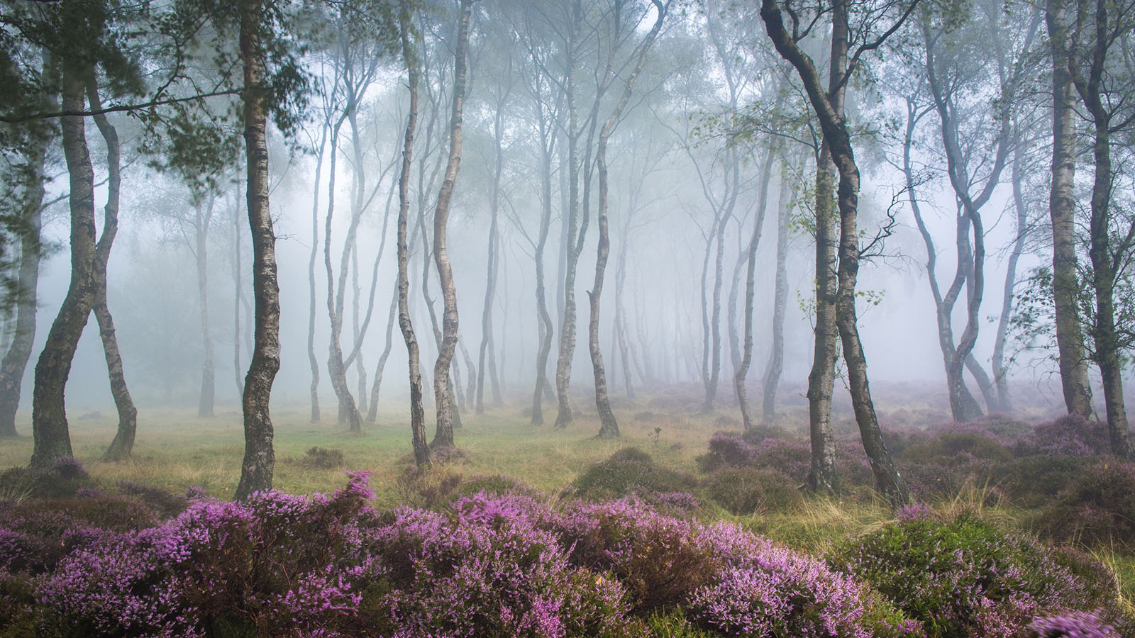 Stanton Moor Forest -stayreading