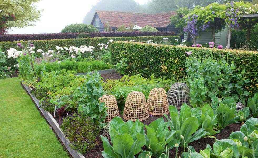 kitchen garden-stayreading