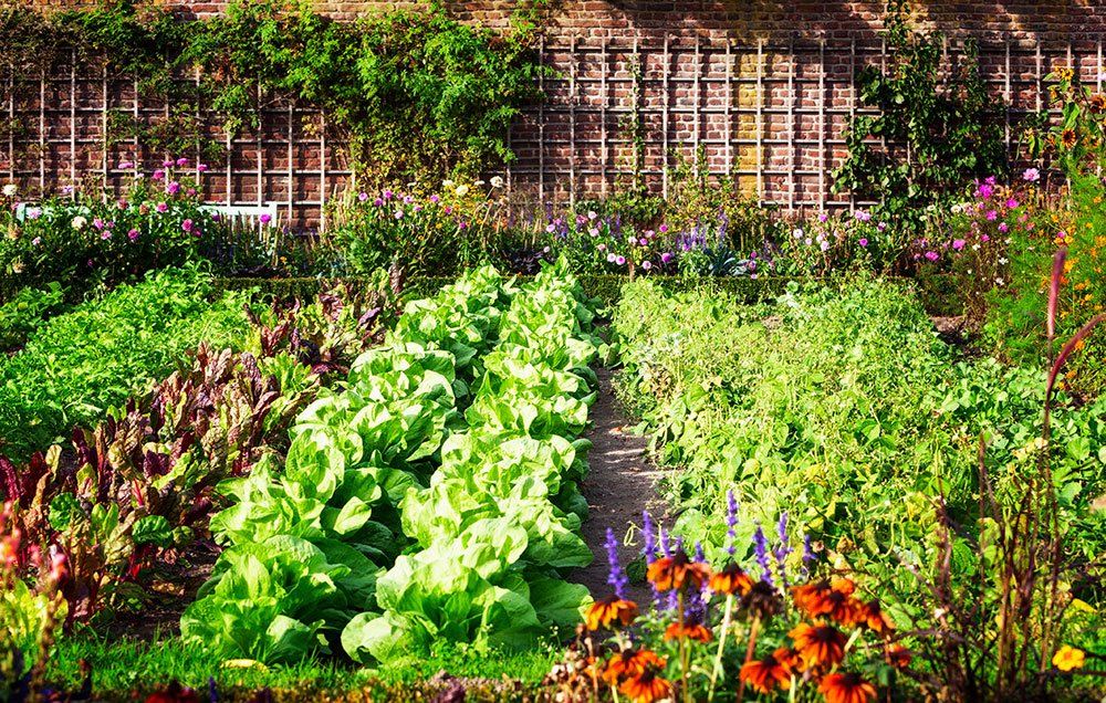 vegetables garden -stayreading